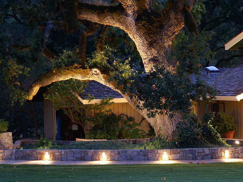 Landscape Lighting Ideas Trees : Landscape lighting for your vancouver property
